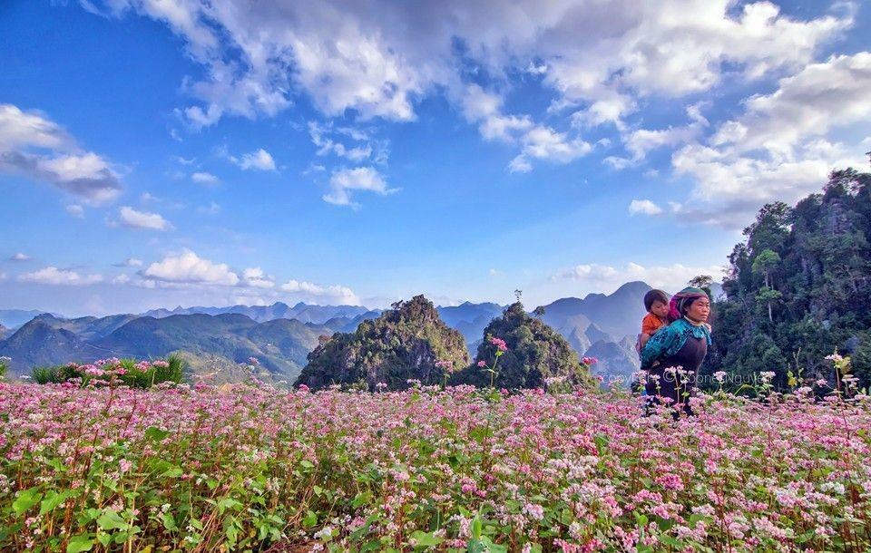 Kinh nghiệm du lịch Hà Giang chi tiết dành cho bạn