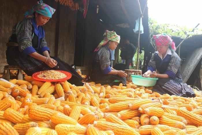 Mèo Vạc Hà Giang -Nét riêng thu hút khách du lịch tại Cao nguyên đá Đồng Văn