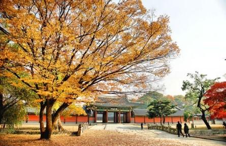 TOUR DU LỊCH SEOUL – ĐẢO NAMI - EVERLAND 5N4Đ