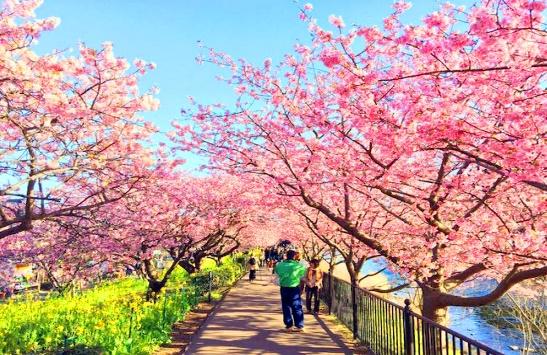 Tết Nhật Bản